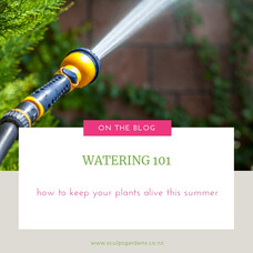 Watering 101 - How To Keep Your Plants Alive This Summer