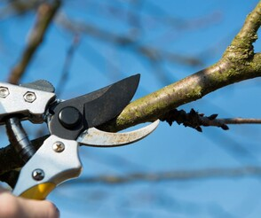 gardener north shore pruning