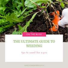 The Ultimate Guide To Weeding