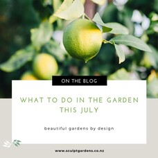 What To Do In The Garden This July