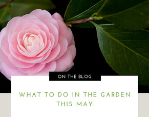 What To Do In The Garden This May