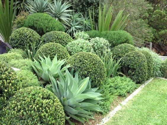Your Ultimate Guide Design A Native New Zealand Garden